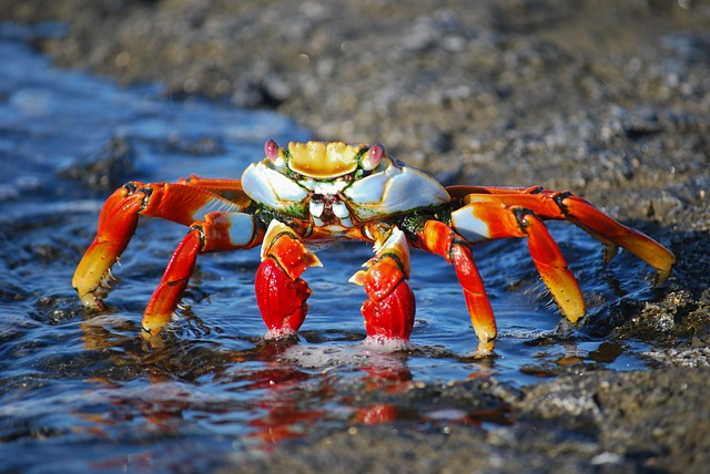 colorful crab in amazon_PD