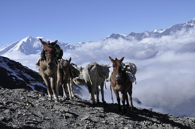 donkey_trekking in nepal_PD