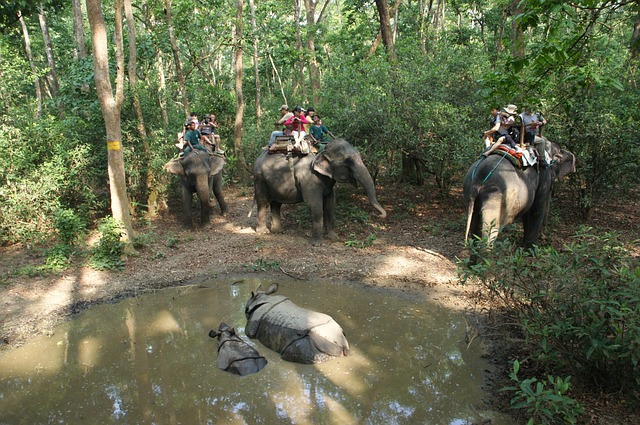 elephants tour_chitwan national park_nepal_PD