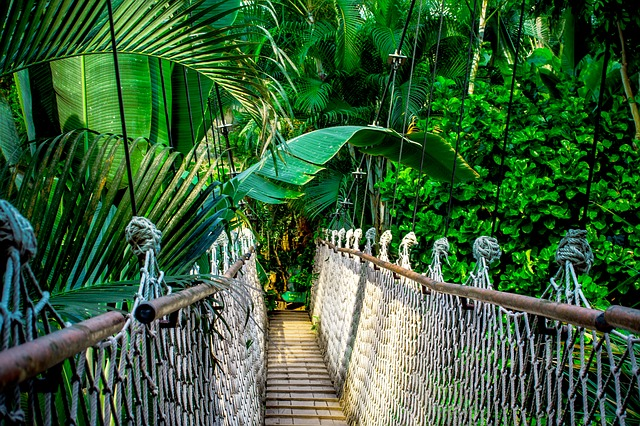 suspension_bridge_in_Amazon jungle_PD