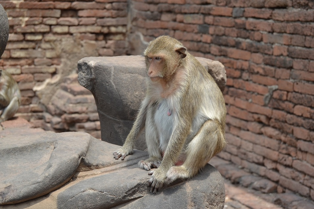 City of Monkeys_Lopburi Thailand_PD