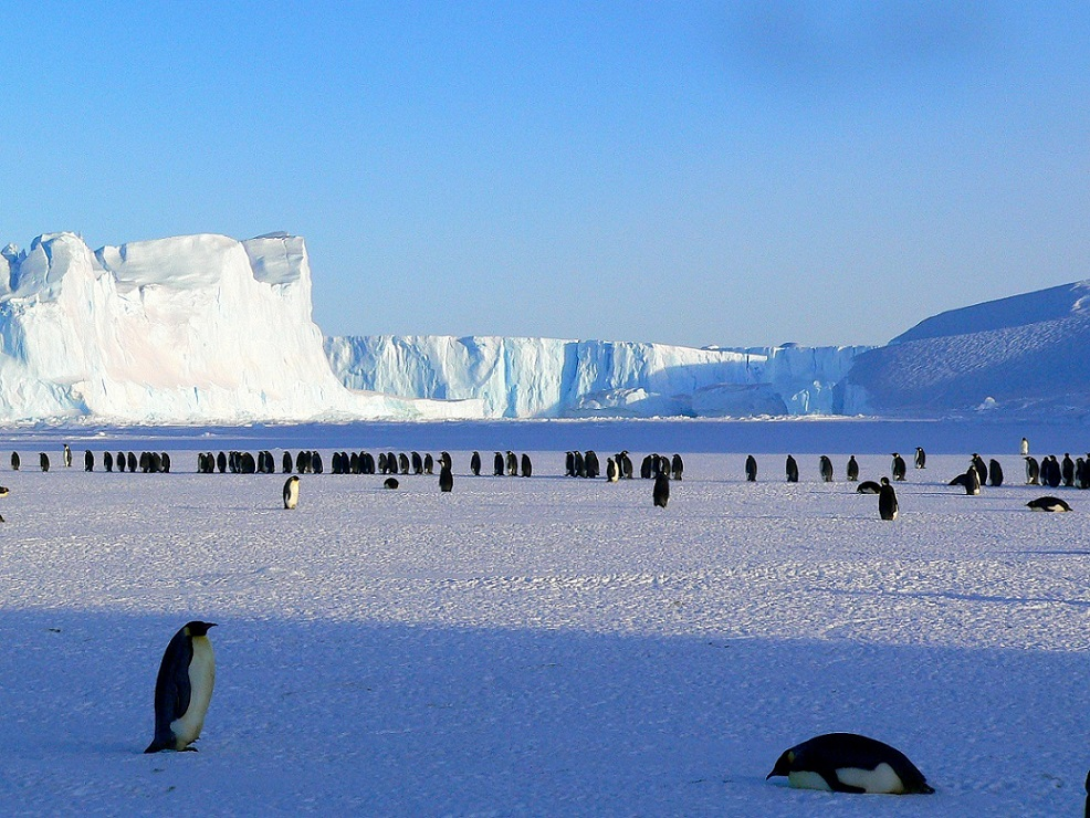 Emperor Penguins_Antarctica_PD