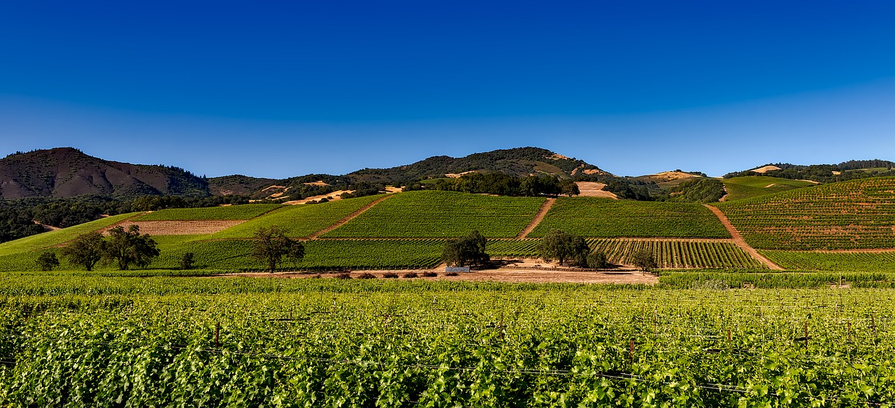 Napa Valley_Sonoma_Vineyard California_PD