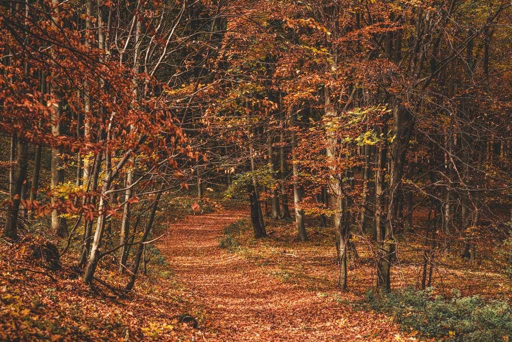 autumn-fall-leaves-nature-forest_bükk mountains_hungary_tree_branch_nature_PD