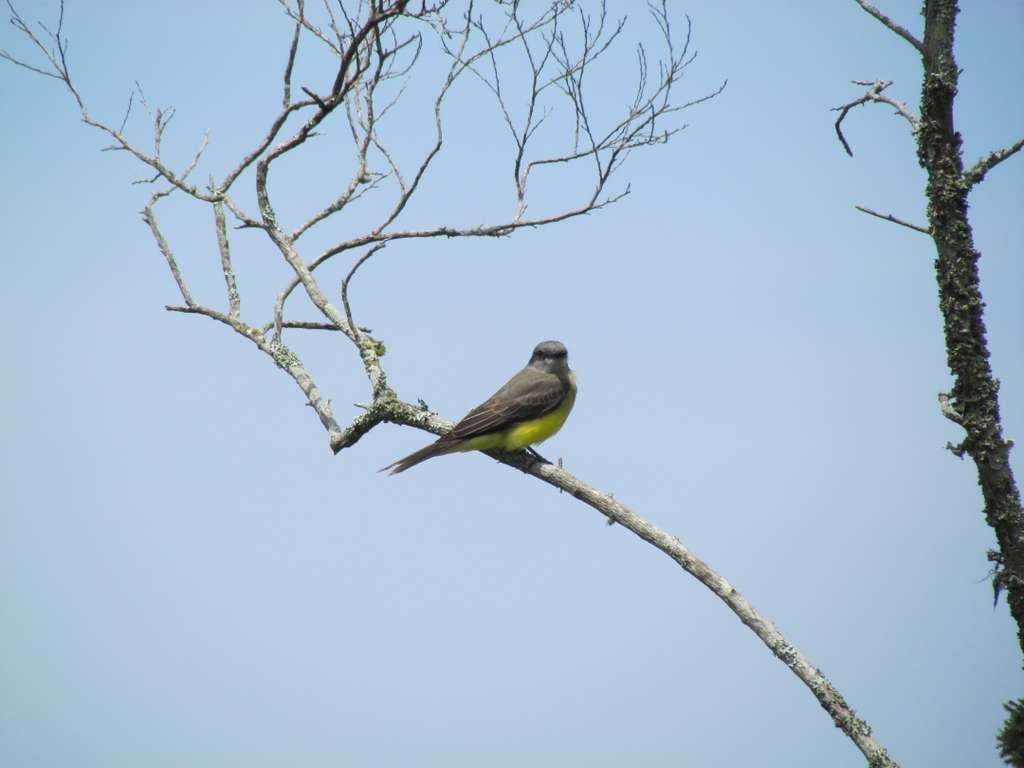 birds-of-florianópolis-brazil_tree_sky_PD