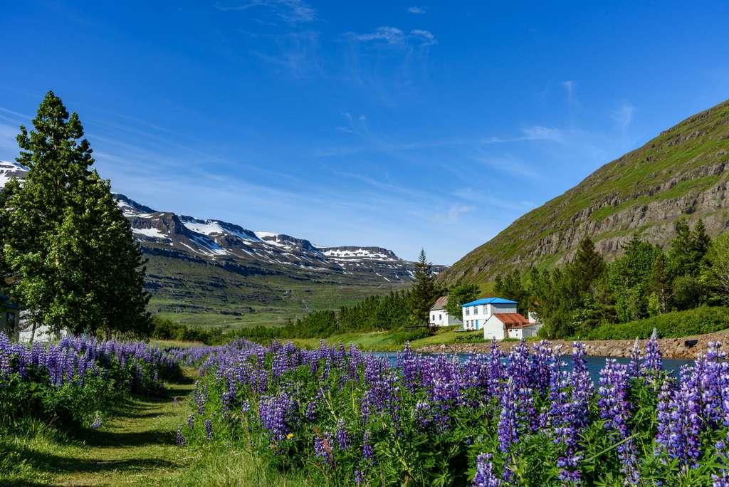 iceland-landscape-seyðisfjörður_nature_house_tree_flower_mountain_sky_PD