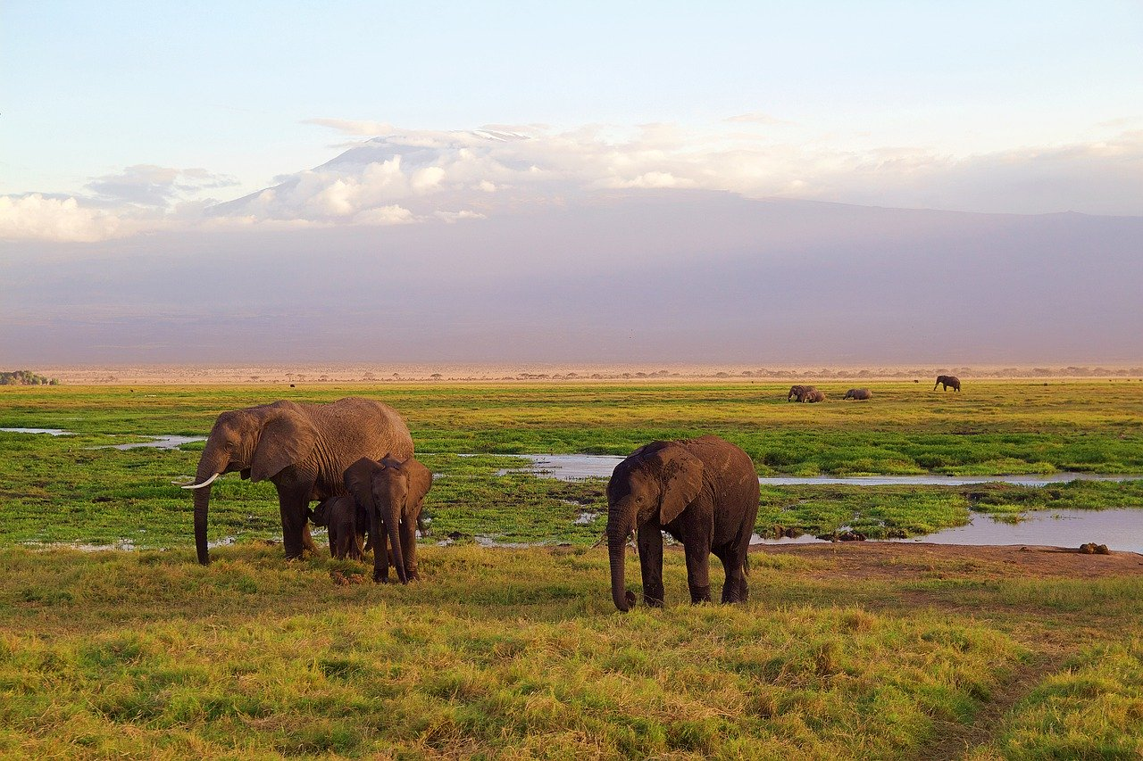 Elephants Family in Amboseli National Park Kenya Africa_PD