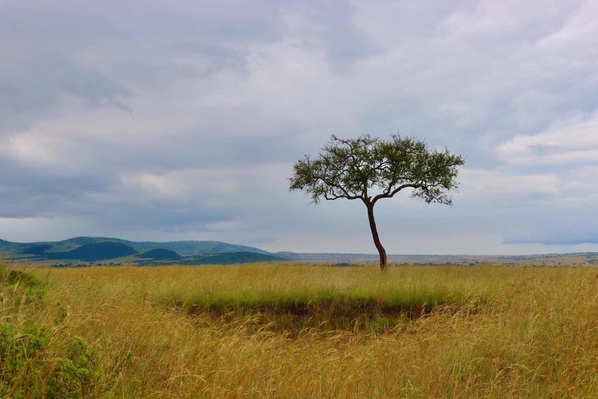 Kenya Africa Safari_AOT