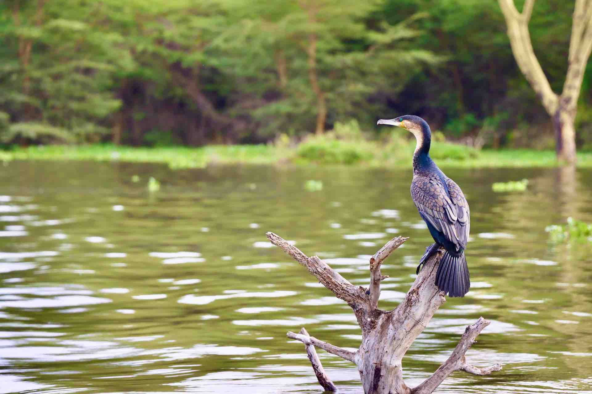 Lake Naivasha_Kenya_AOT
