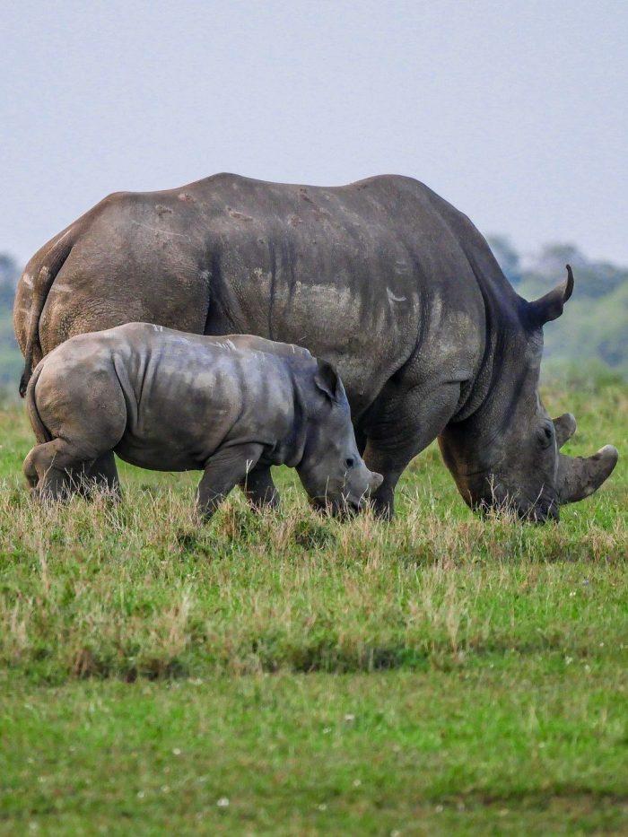 baby rhino_kenya_PD