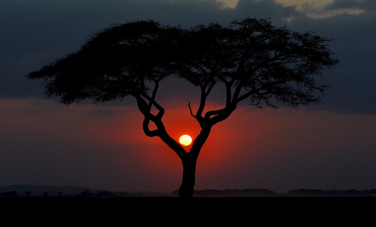 safari sunset view in kenya_PD
