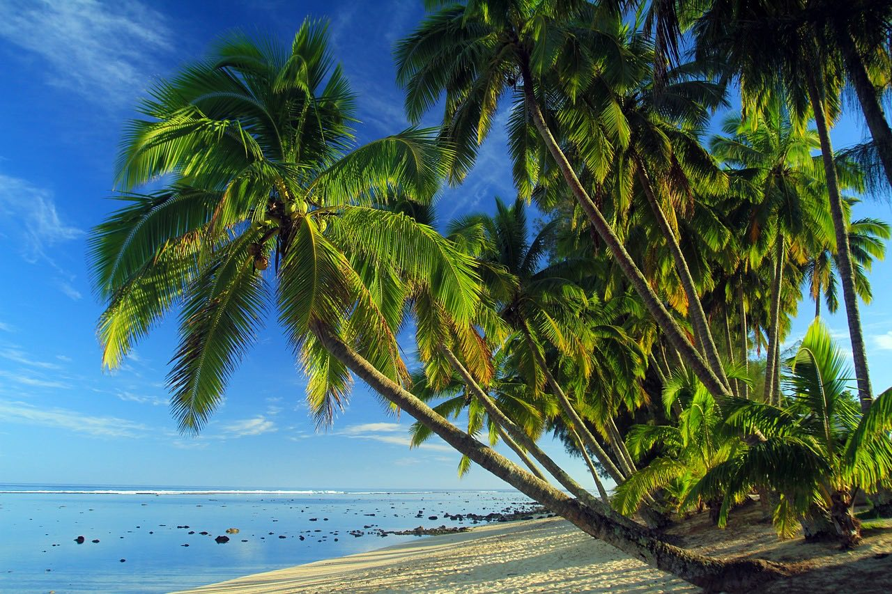 Cook Islands_Palms_PD