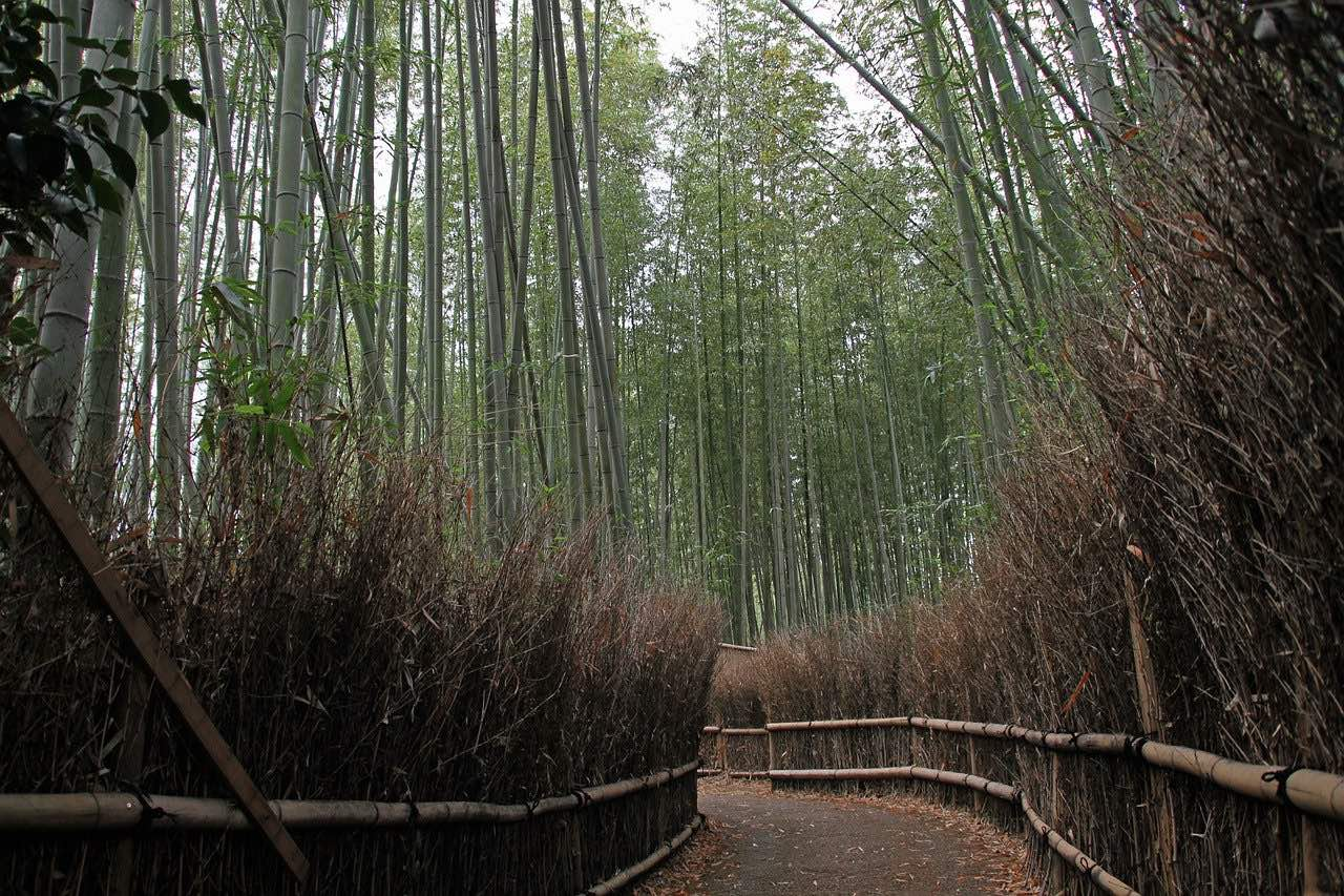 Arashiyama Bamboo Forest_Kyoto Japan_PD