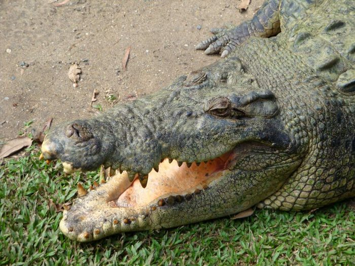 Alligator Adventure_Animal Park_PD