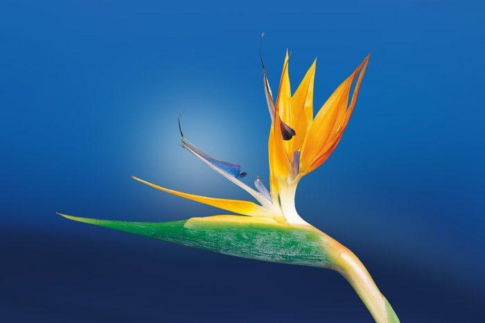 Bird World_Botanical Garden_PD