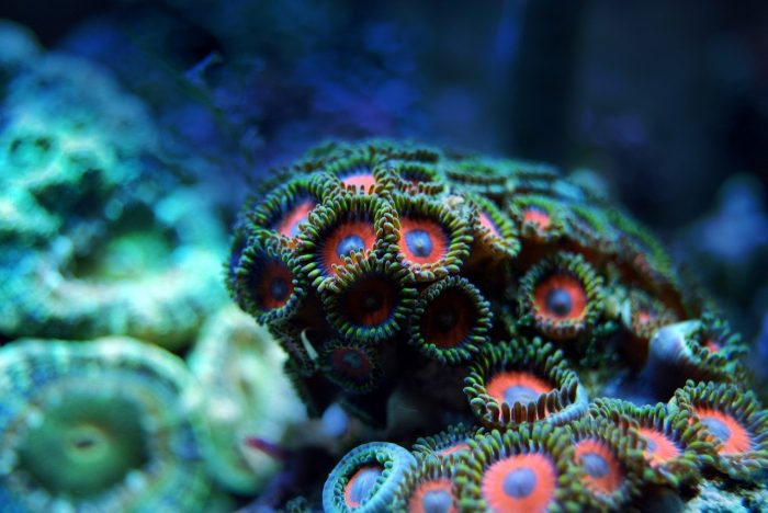 Coral Reef_PD