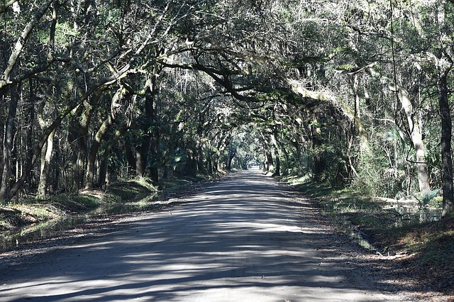 Tunnel of Trees_Botany Bay Road_South Carolina_USA_PD