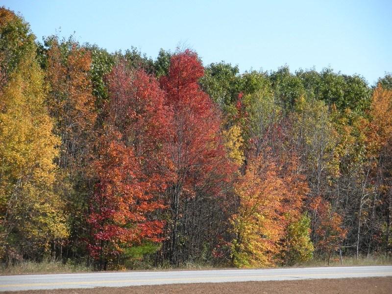Fall Foliage_Guest_AOT