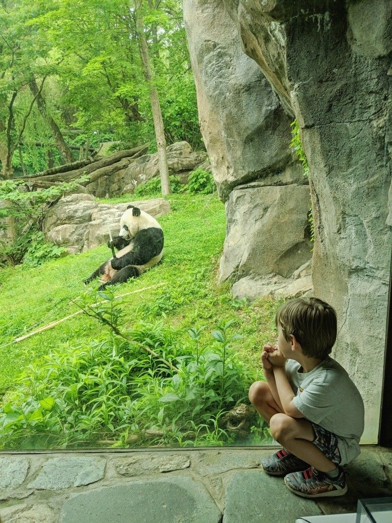 National Zoo_Guest_AOT