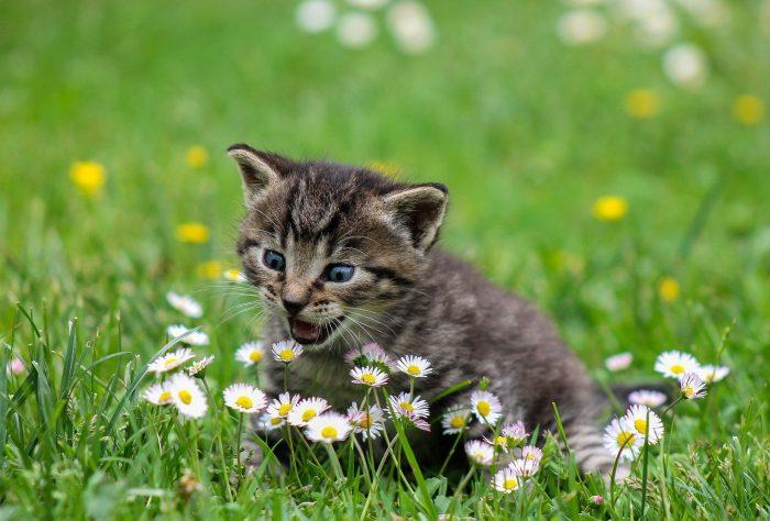 cute kitty_cat_PD